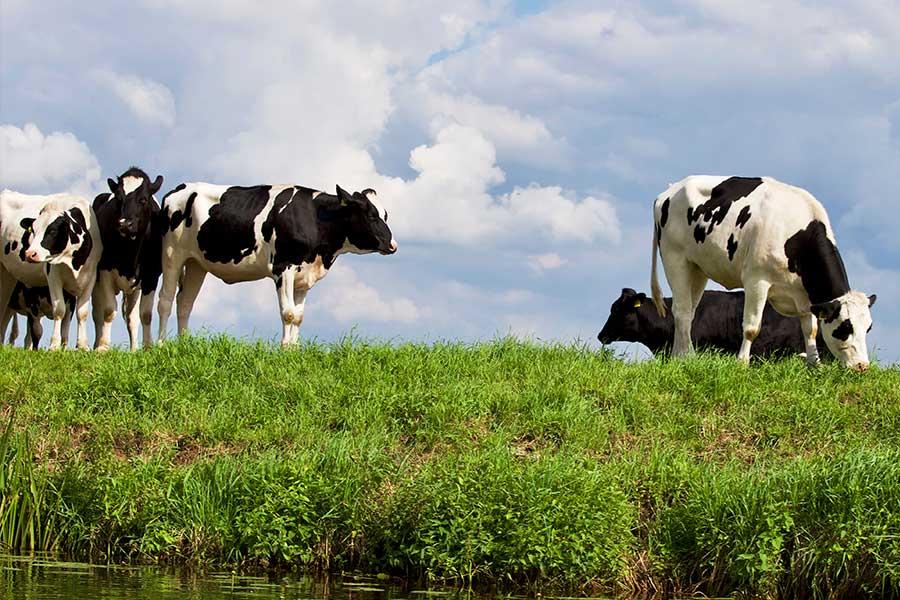 Dairy, Milk & Livestock Hygiene